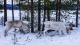 20140211_finnland_02