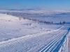 Im Skigebiet steppt der Bär